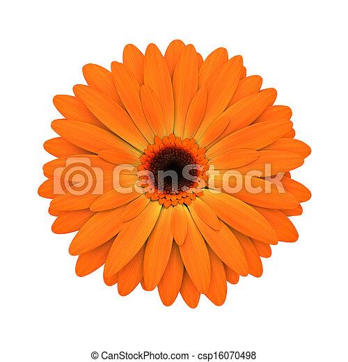 פרוח, render, -, הפרד, חיננית, תפוז, לבן, 3d - csp16070498
