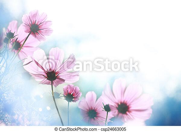 פרחים - csp24663005