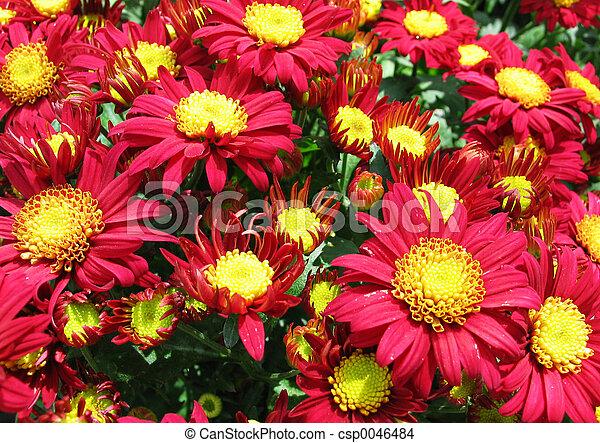 פרחים - csp0046484