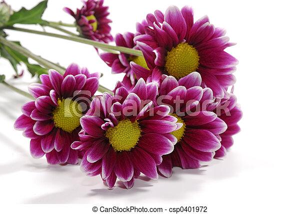 פרחים - csp0401972