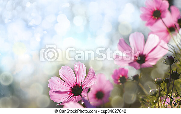 פרחים - csp34027642