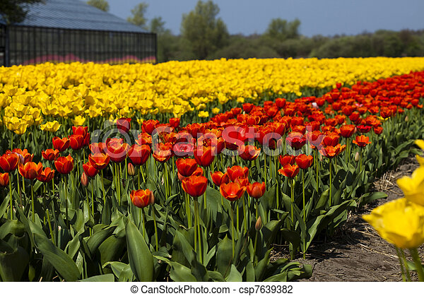 פרחים - csp7639382