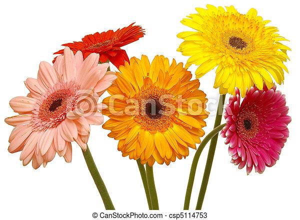 פרחים - csp5114753