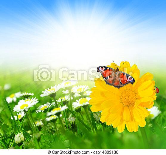 פרחים, קפוץ, פרפר - csp14803130