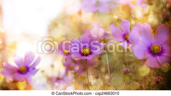 פרחים - csp24663010