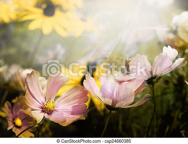 פרחים - csp24660385
