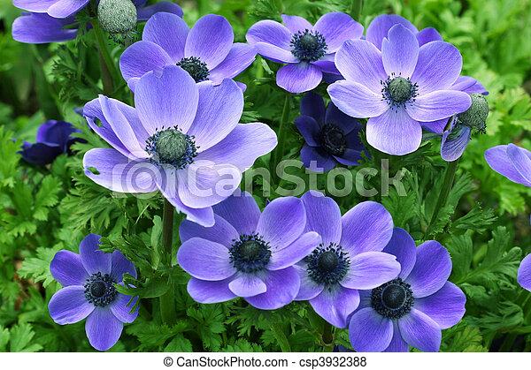 פרחים - csp3932388