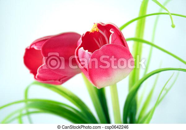 פרחים - csp0642246