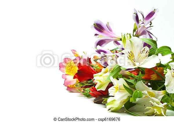 פרחים - csp6169676