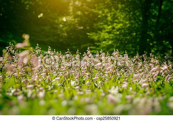 פרפר, פרחים, שני - csp25850921