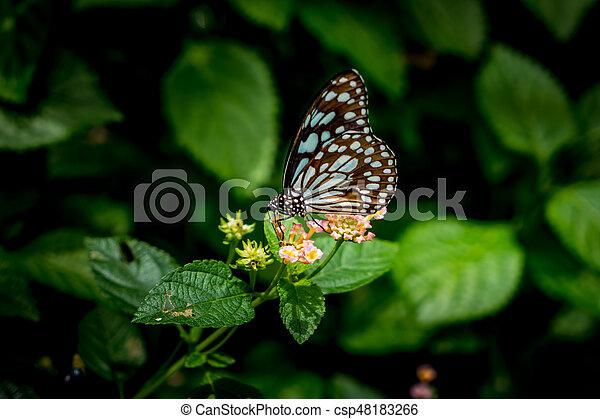פרפר, פרחים - csp48183266