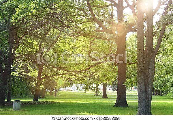 קיץ, יער, עצים - csp20382098