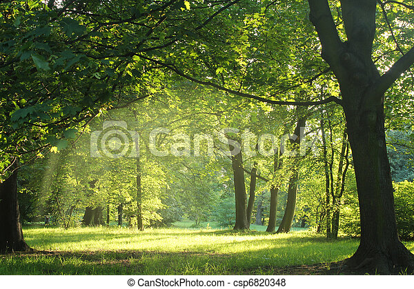 קיץ, יער, עצים - csp6820348