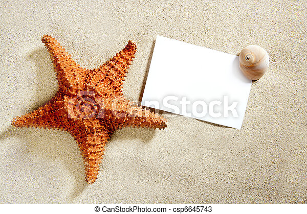 קיץ, כוכב ים, קליפות, נייר של חול, טופס, החף - csp6645743