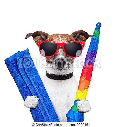 קיץ, כלב, חופשות - csp12290161