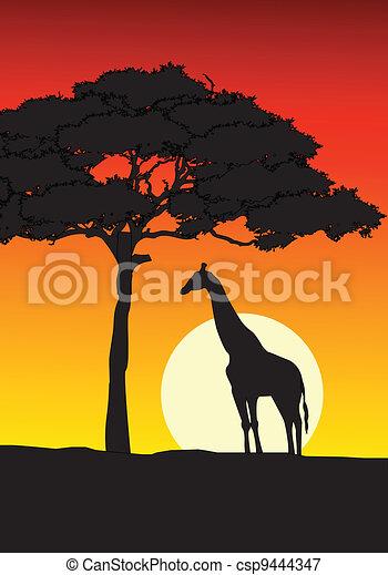 שקיעה, רקע, אפריקני - csp9444347