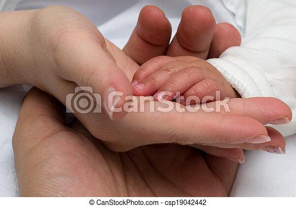 お父さん, 赤ん坊, 家族, お母さん, 手 - csp19042442