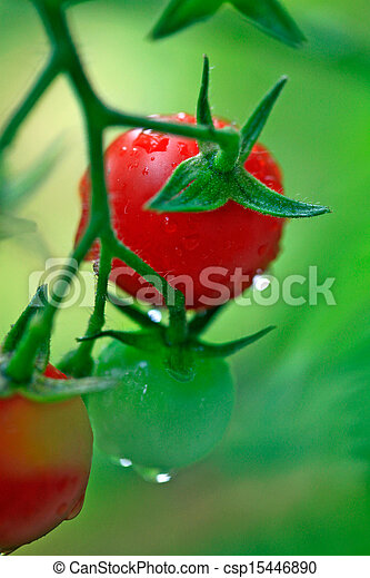 さくらんぼ, 緑, トマト, 赤, 新たに - csp15446890