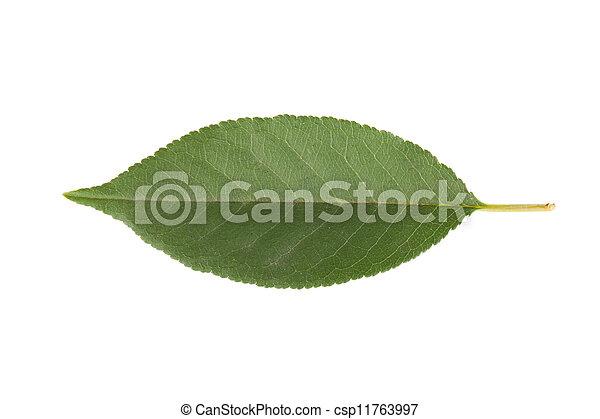 さくらんぼ, 葉 - csp11763997