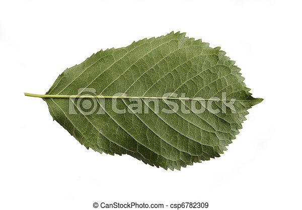 さくらんぼ, 葉 - csp6782309