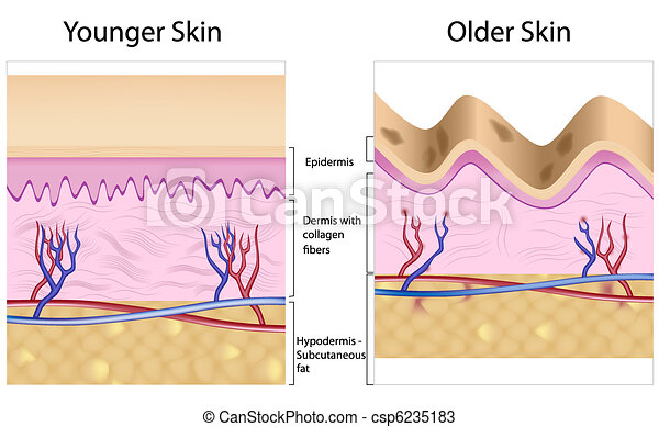 しわを寄せられた, ∥対∥, 滑らかな皮膚 - csp6235183