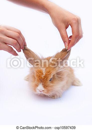 わずかしか, ウサギ, 手 - csp10597439