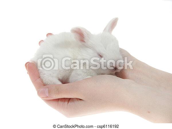 わずかしか, ウサギ, 手 - csp6116192
