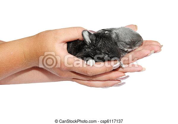 わずかしか, ウサギ, 手 - csp6117137