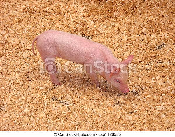 わずかしか, 子豚 - csp1128555