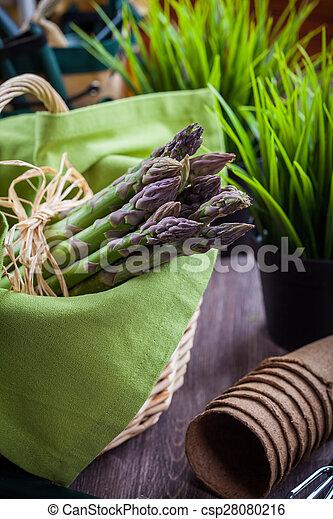 アスパラガス, 緑, 道具, 庭, 新たに - csp28080216