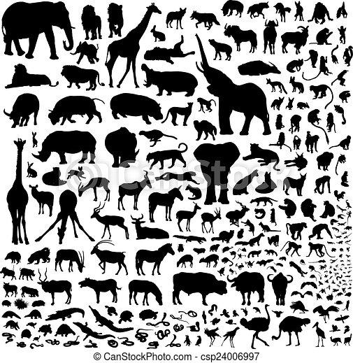 アフリカ, すべて, 動物 - csp24006997