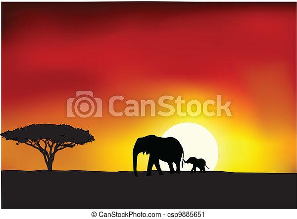 アフリカ, 日没 - csp9885651