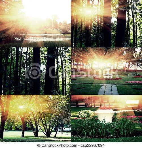 イメージ, crossprocessed, 日没, コレクション, 木 - csp22967094