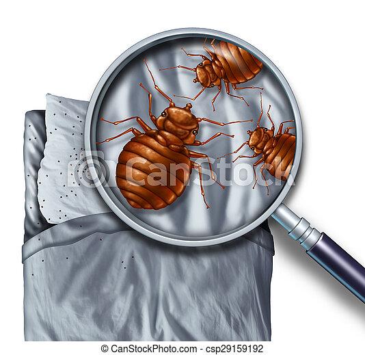 インフェステーション, 虫, ベッド - csp29159192