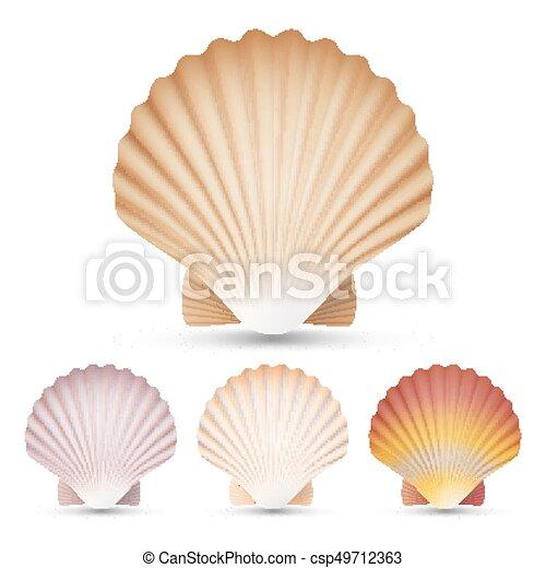 エキゾチック セット Vector 貝殻 隔離された イラスト 記念品