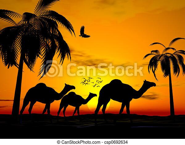 エジプト, 日没, 砂漠 - csp0692634