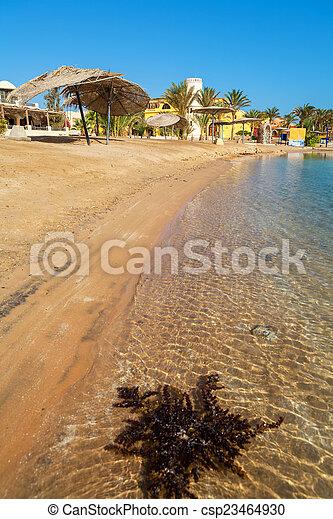 エジプト, el, 浜, gouna. - csp23464930