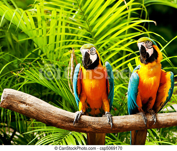 オウム, モデル, 鳥, とまり木, カラフルである - csp5069170
