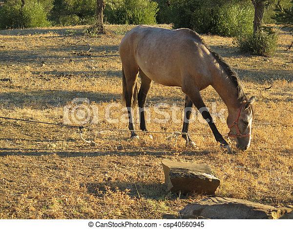 オリーブ木立ち, 馬, あし毛の馬...