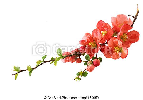 オレンジ, 桜 - csp6160950