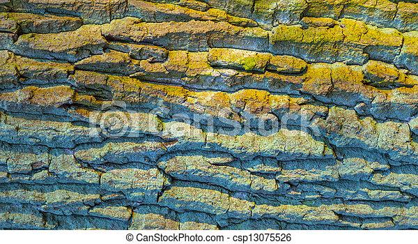 オーク, 樹皮, 古い木 - csp13075526