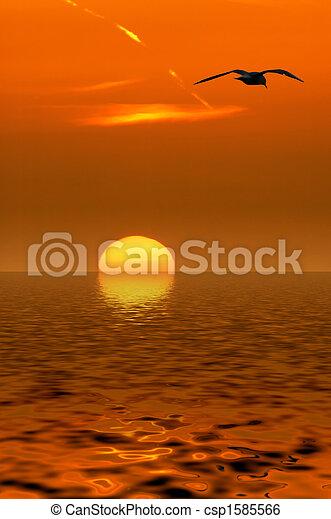 カモメ, 日没 - csp1585566