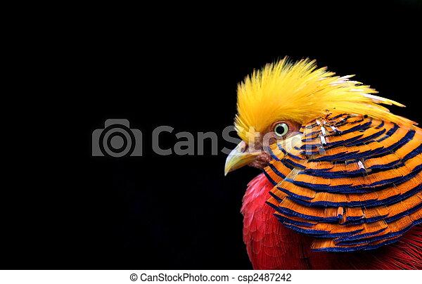 カラフルな鳥 - csp2487242