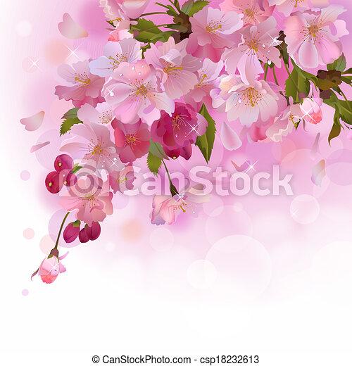 カード, さくらんぼ, ピンクの花, ブランチ - csp18232613