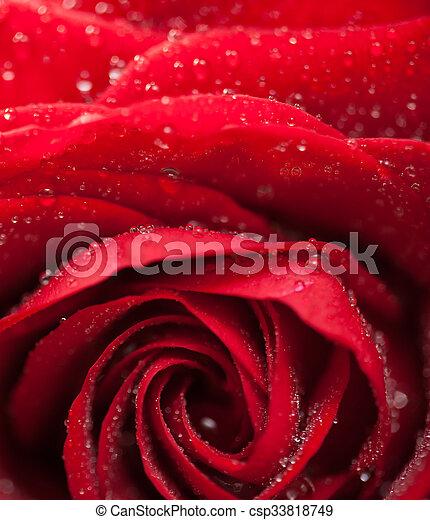 キー, 黒, 低い, バラ, 赤 - csp33818749