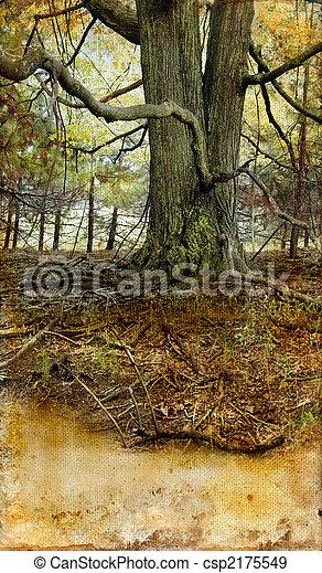 グランジ, 木, 古い, 背景 - csp2175549