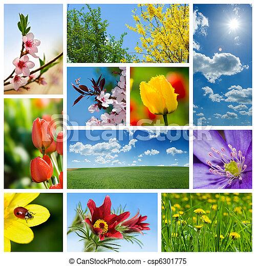 コラージュ, 春 - csp6301775