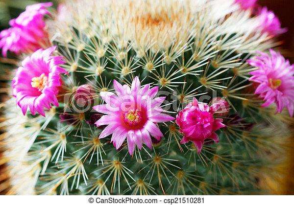 サボテンの花, plant. - csp21510281