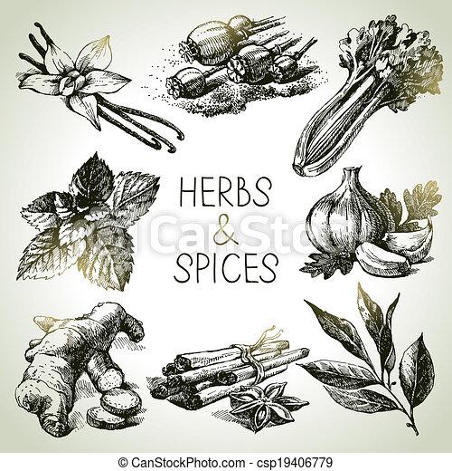 スケッチ, アイコン, 手, ハーブ, 引かれる, spices., 台所 - csp19406779