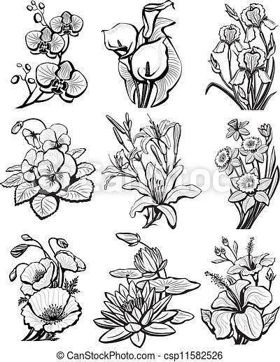 スケッチ, 花, セット - csp11582526